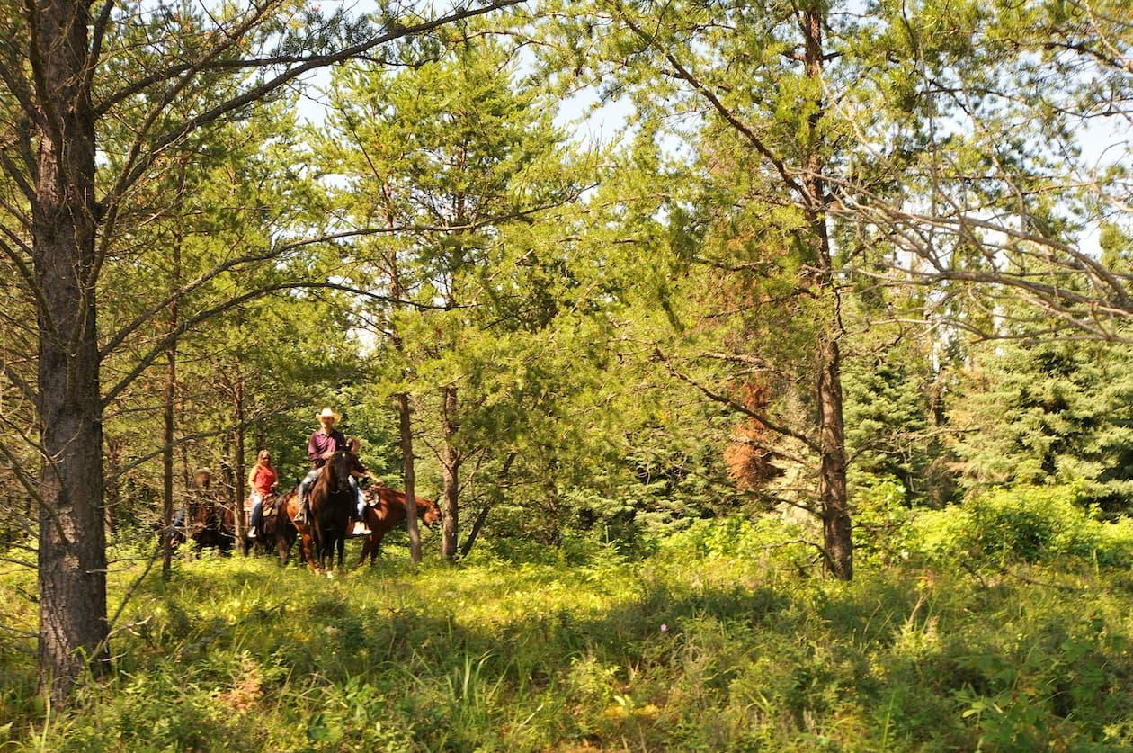 Leaning Tree Trail Rides in Athabasca