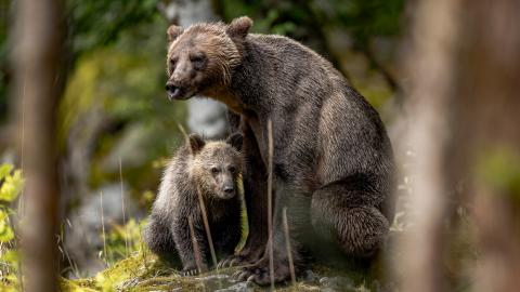 Black bear and cub in B.C.
